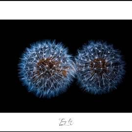 Dandelion Flower #7 by Terry Hi