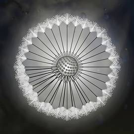 Dandelion Seed Head Black And White Abstract Rain Droplets by Joan Stratton