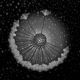 Dandelion Seed Rain Droplets Black And White by Joan Stratton