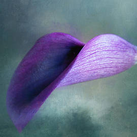 Dark Magenta Lily by Terry Davis