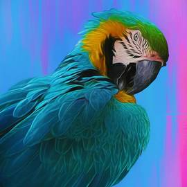 Dashing Macaw by Chrystyne Novack