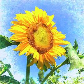 Dashing Sunflower by Luther Fine Art