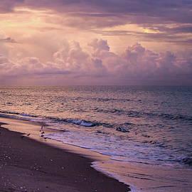 Dawn  by Rebecca Herranen