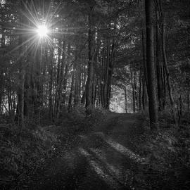 Daylight by Michael Jones