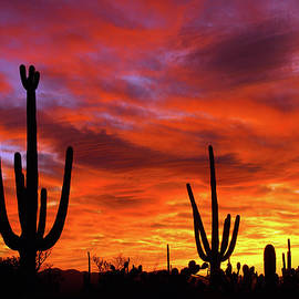 Day's End, Tucson Mountain Park by Douglas Taylor