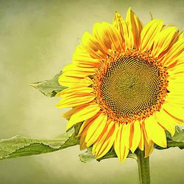 Dazzling Sunny Flower by Marcia Colelli