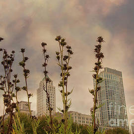 Dead flowers and Chicago skyline by Juli Scalzi
