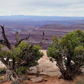 Dead Horse Desert by Michael Morse