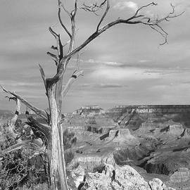 Dead Tree Hangs Over The Grand Canyon 2 by Mike McGlothlen