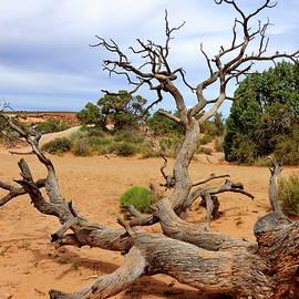 Dead Tree in Utah Landscape by Lyuba Filatova