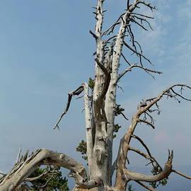 Dead Tree by Lyuba Filatova