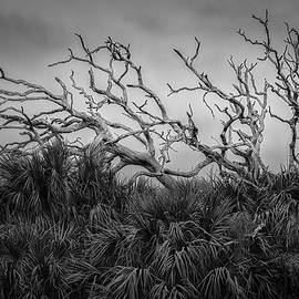 Dead Trees and Palmettos