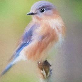 December Bluebird - digital pencil by Scott Pellegrin