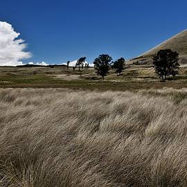 Deep Grasses on Mauna Loa by Heidi Fickinger