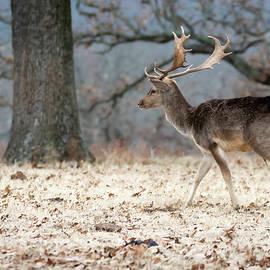 Deer and Nature at Woolaroc by Debra Martz