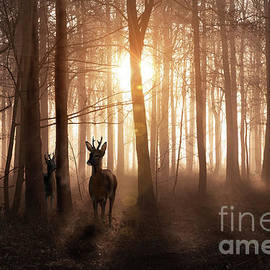 Deer in woods at sunrise in Norfolk England by Simon Bratt Photography LRPS