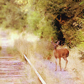Deer on the Railroad Tracks by Peggy Collins