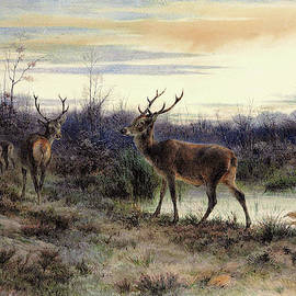 Deers in the forest at Fontainebleau - Digital Remastered Edition