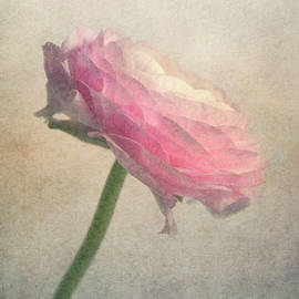 Delicate by Claudia Moeckel