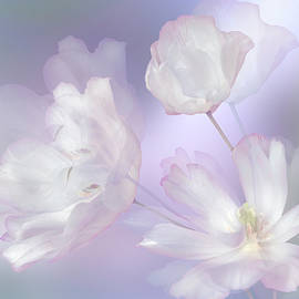 Delicate silk by larisa Fedotova