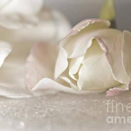 Delicate White Rose Flowers by Ella Kaye Dickey