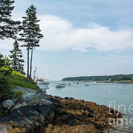 Delightful Cove in Maine by Ruth H Curtis