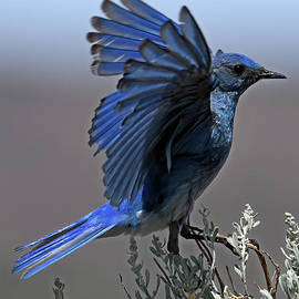 Desert Blue by Mike Dawson