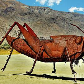 Desert Grasshopper by Suzanne Wilkinson