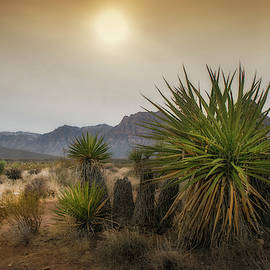 Desert Mountains with Yucca Plant by Frank Wilson