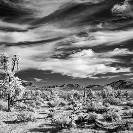 Desert Sky Waves by Cathy Franklin