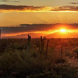 Desert Sunset On The Horizon  by Saija Lehtonen