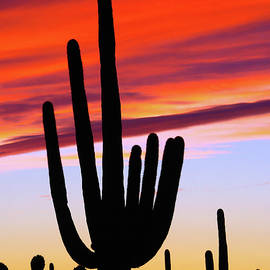 Desert Sunset Silhouettes by Douglas Taylor