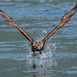 Determination - Eagle Art by Jordan Blackstone