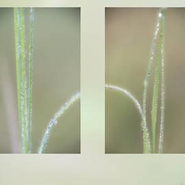 Dew On Grass by Karen Rispin