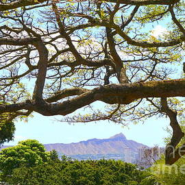Diamond Head View from Punchbowl in Makiki - 2 by Mary Deal