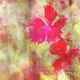 Dianthus Red by Jean OKeeffe Macro Abundance Art