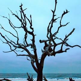 Dirftwood tree by Camera Paintbrush