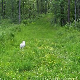 Grassy Trails by Ann Brown