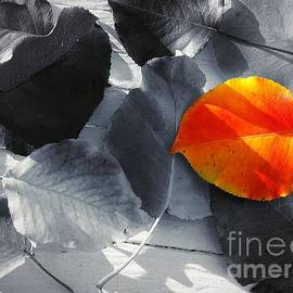 Distinctive  by Virginia Artho