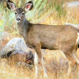 Doe Days of Autumn by Donna Kennedy