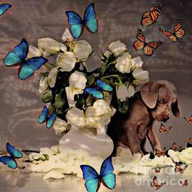 Dog and butterflys by Laurence Stefani