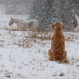 Dog And Horses In The Snow by Karen Rispin