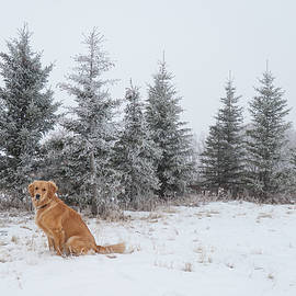 Dog and winter Christmas trees by Karen Rispin