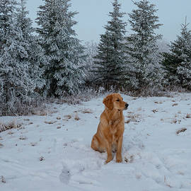 Dog And Winter Trees by Karen Rispin