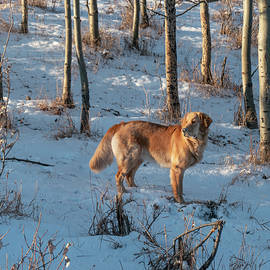 Dog In Winter Woods by Karen Rispin