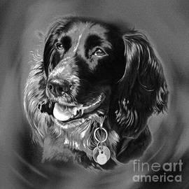 Dog Portrait  by Gull G