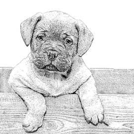 Dogue de Bordeaux - DWP1045210 by Dean Wittle