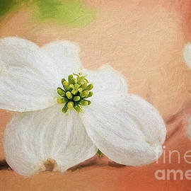 Dogwood Blossom Painterly Peach by Sharon McConnell