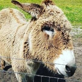 Donkey a bit Wonkey