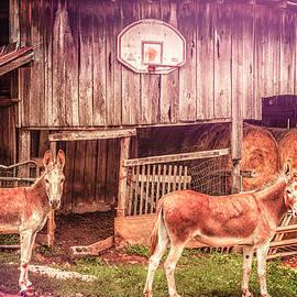 Donkey Basketball by Jim Love